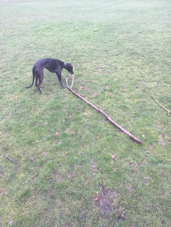 Two sticks! Heaven!
